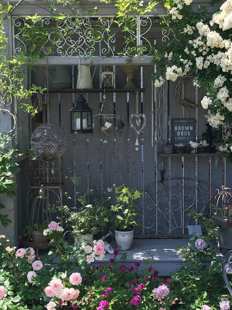 グレーの壁とピンクのバラ