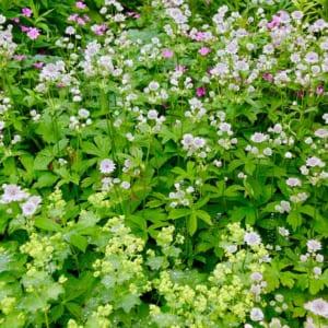 冷涼地の庭 宿根草