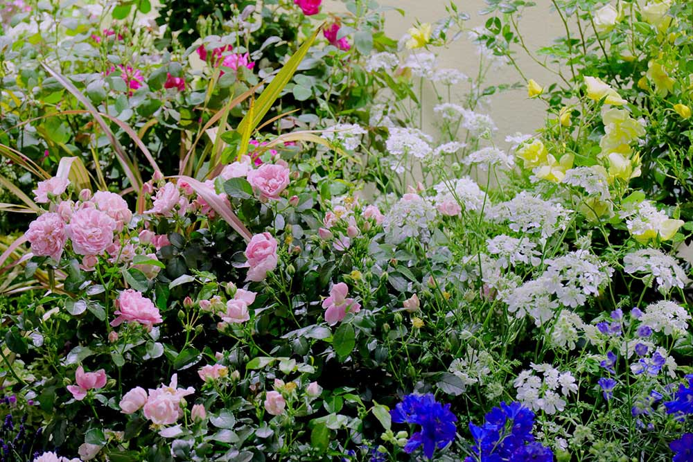ガーデンのバラ