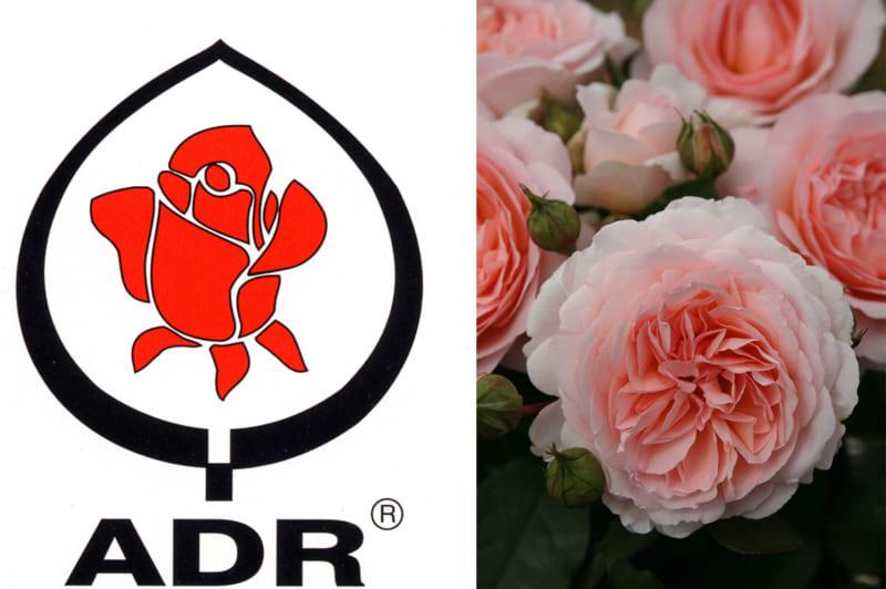 ADR認証