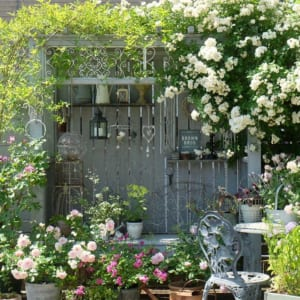 インスタグラマーの庭