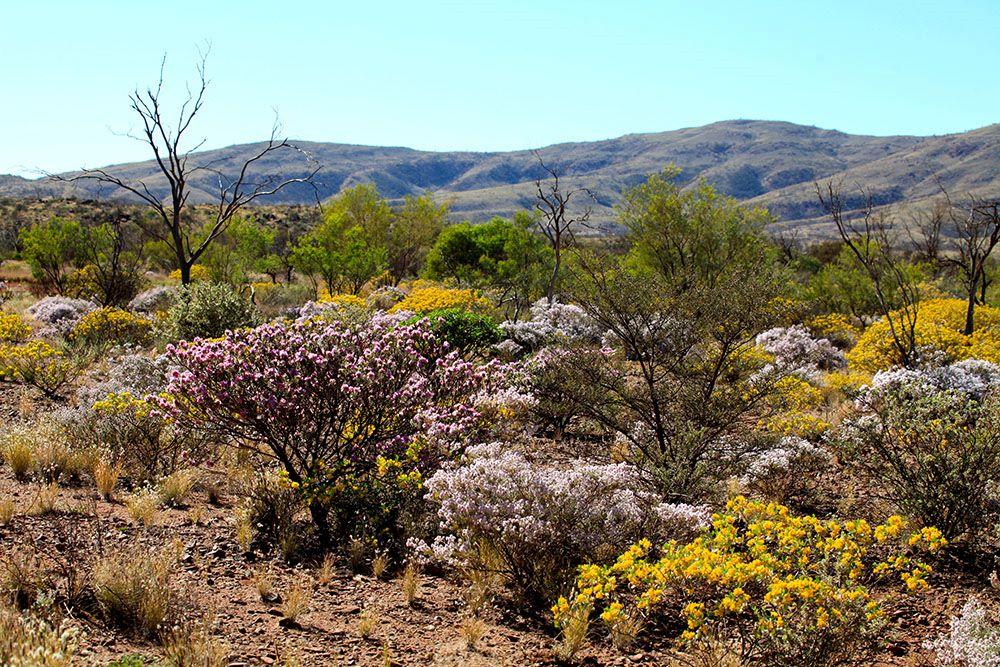 西オーストラリアの植生風景