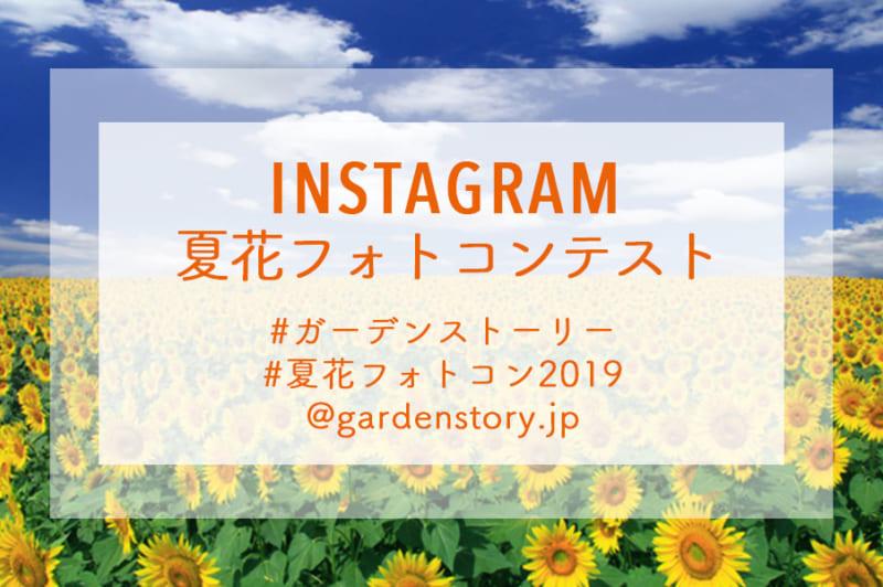 インスタグラム夏花フォトコンテスト