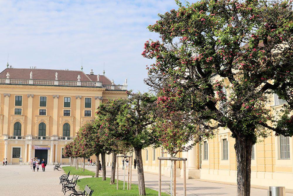 シェーンブルン宮殿のサンザシ