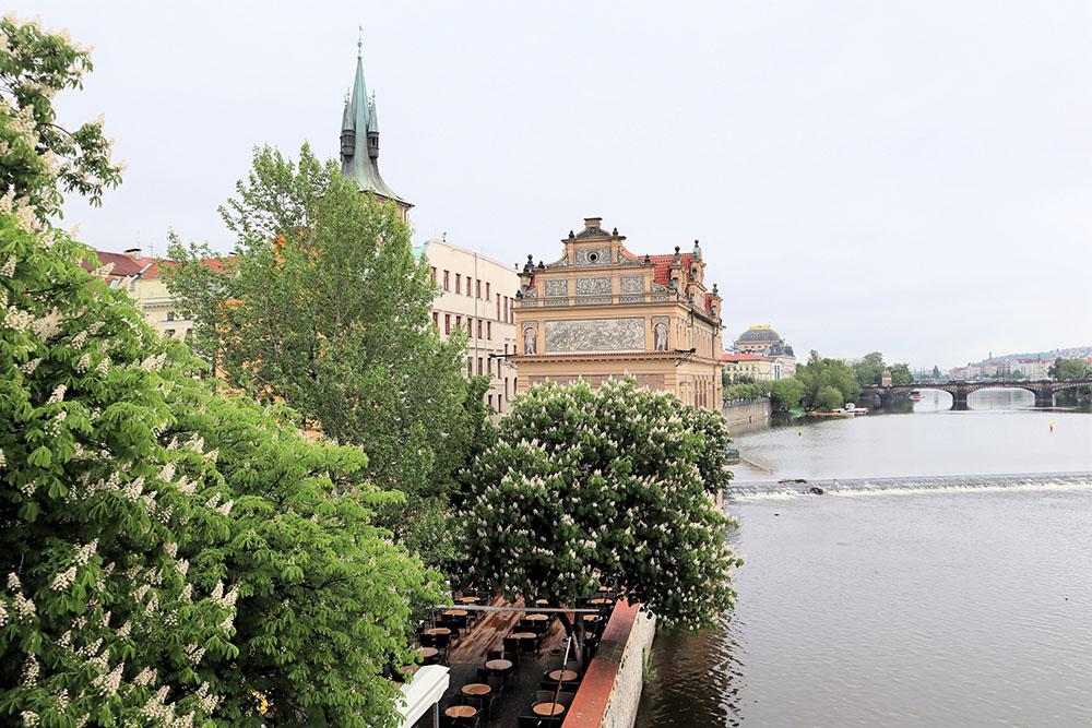 プラハのマロニエ