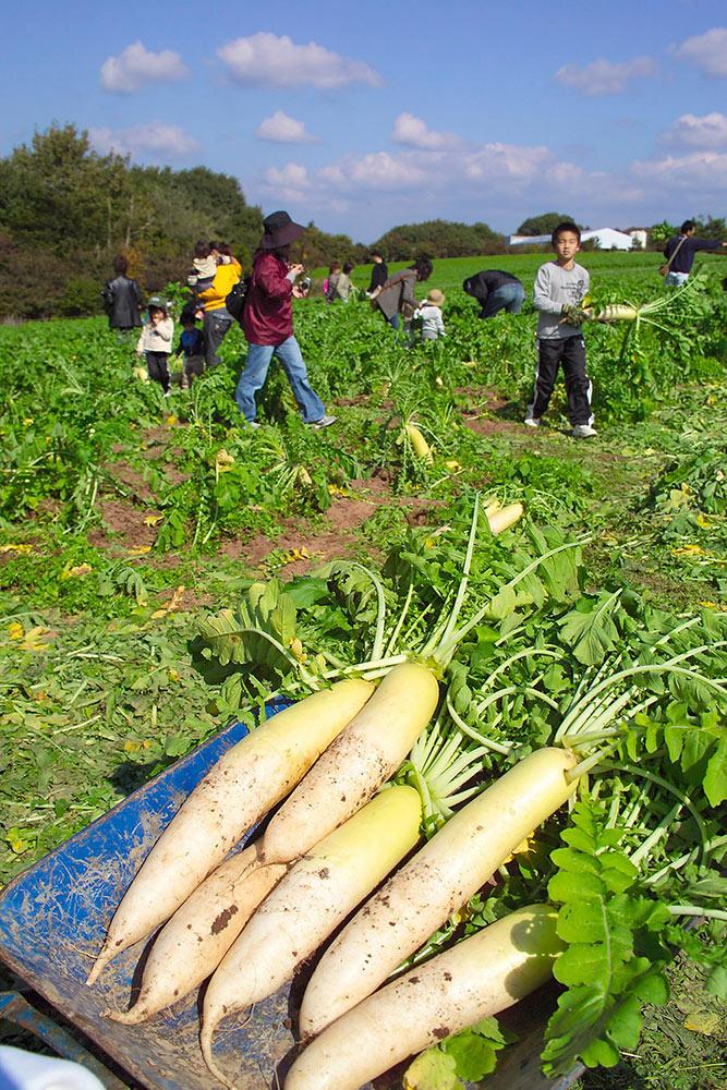 世羅高原農場 収穫祭