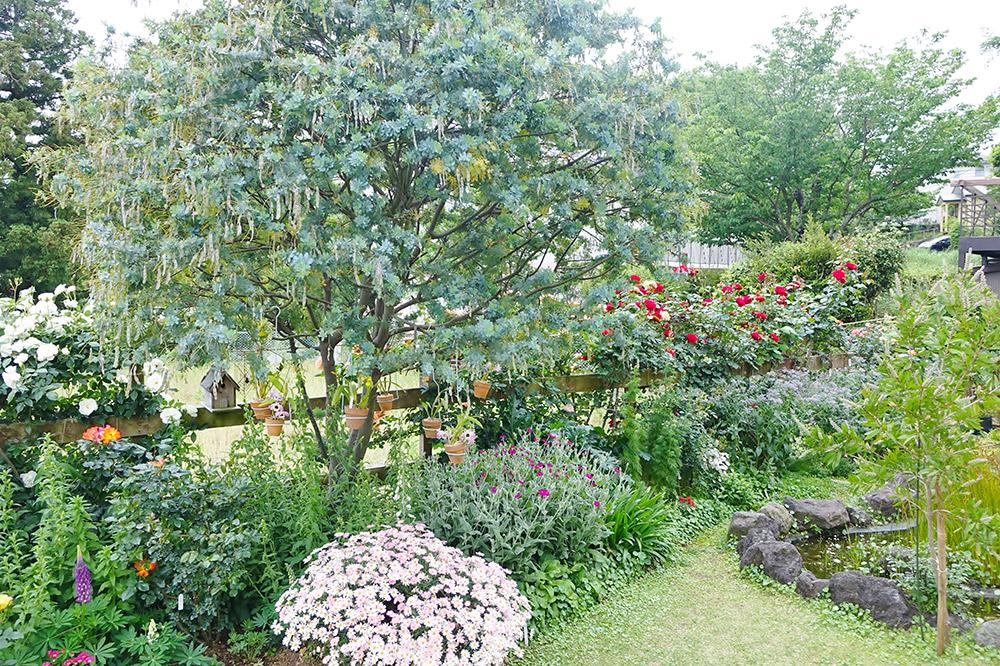 ミモザのある花壇