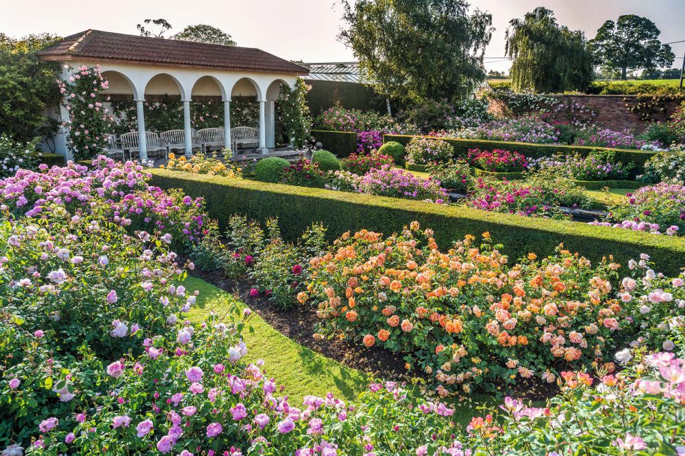 David Austin Renaissance Garden