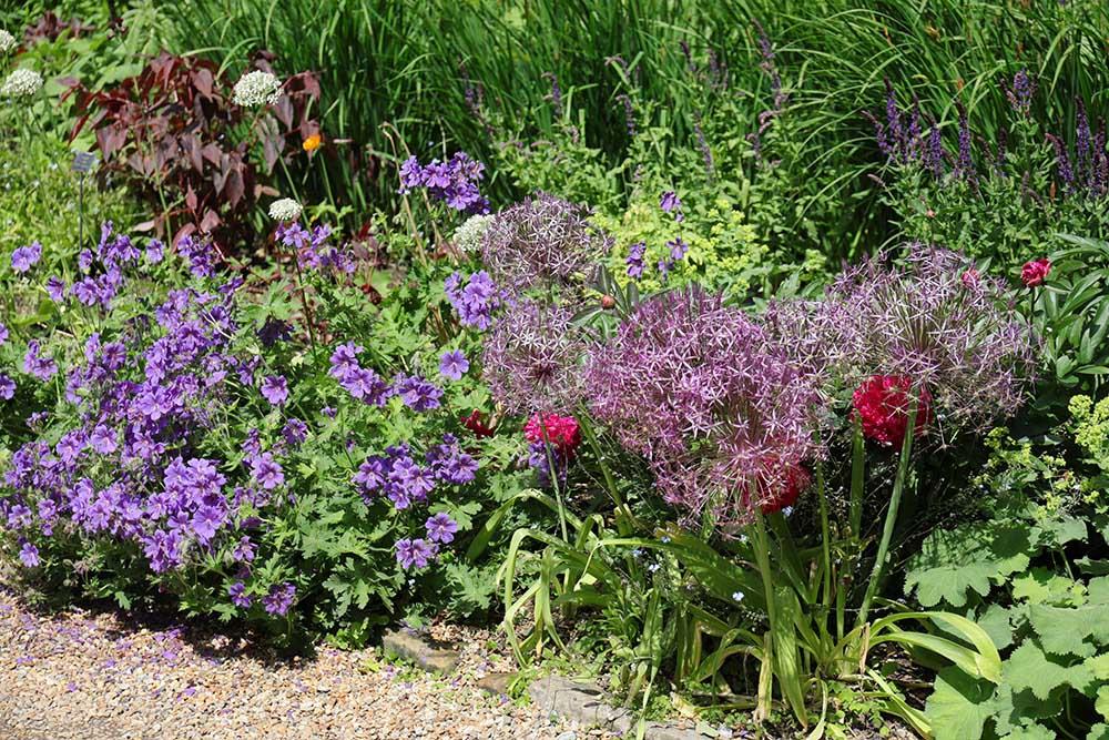 ナイマンズ・ガーデンのボーダー花壇