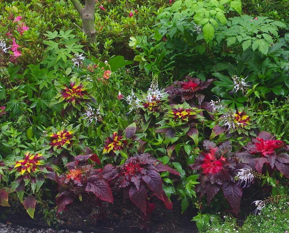 蓼科ゲストハウスの植栽
