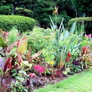 トロピカル花壇