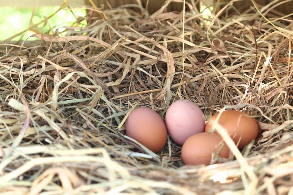 エディブルパークの卵