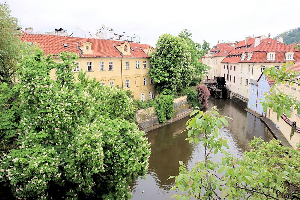 中欧の植物