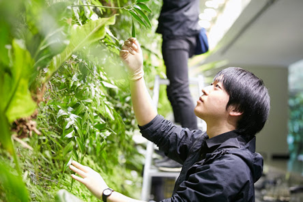 室内緑化に求められる新たな役割