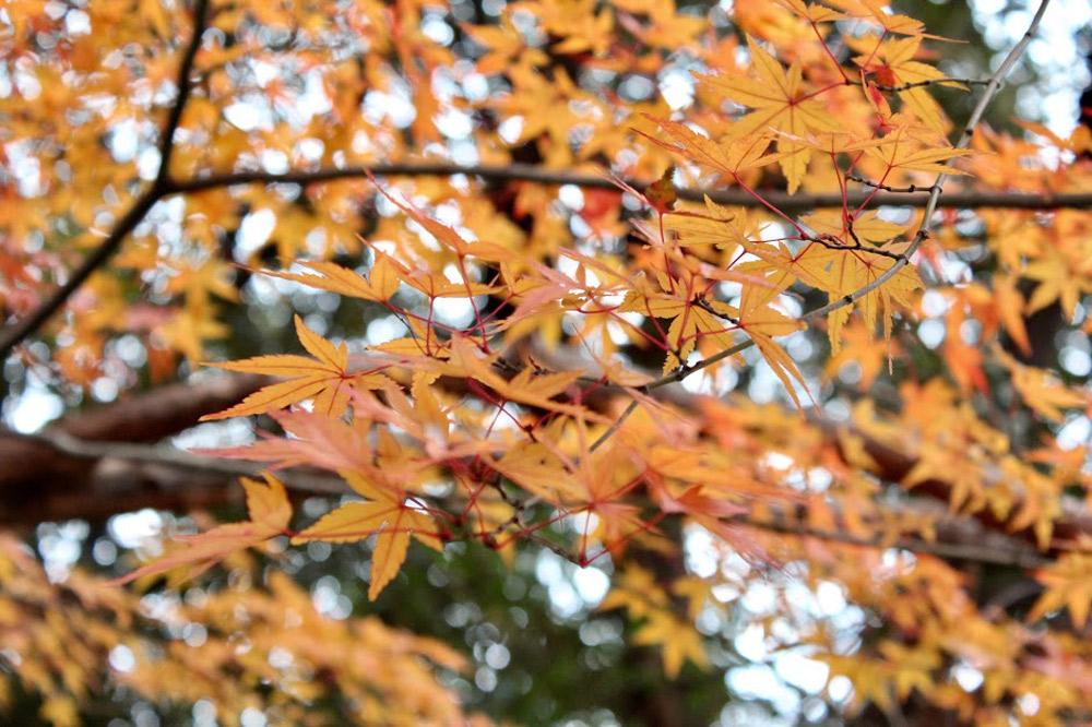 植物の樹種選択や植栽方法、病害虫防除などに関する指導、広報、イベントの開催などを行う緑の相談所