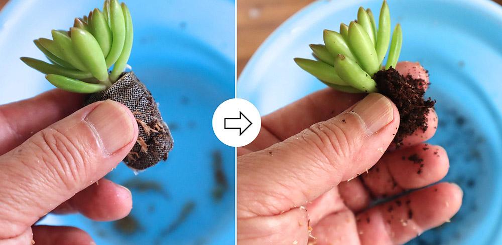 多肉苗の植え込み