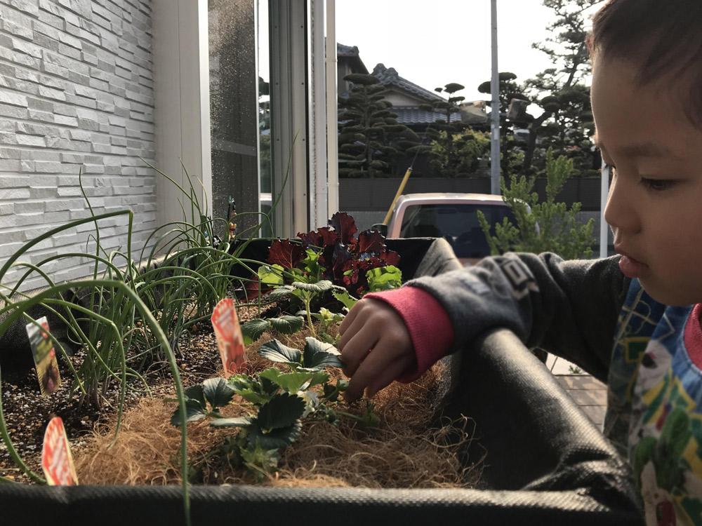 朝一番に庭に出てイチゴの様子を見る長男