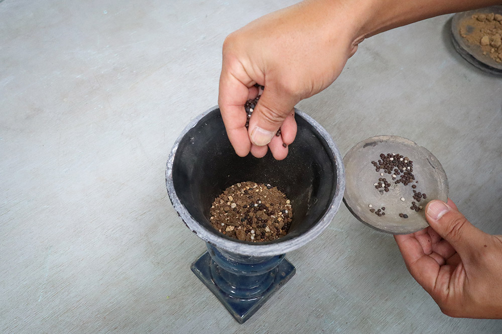 寄せ植えの作り方