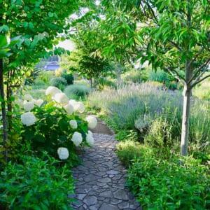 ガーデンの庭木