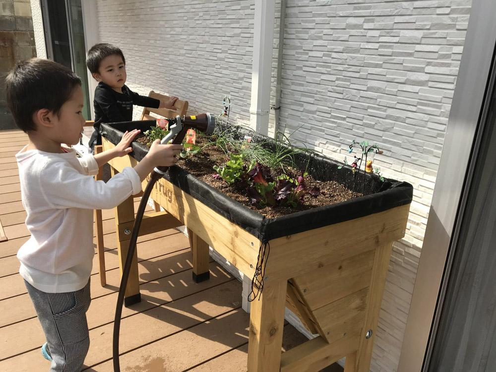 植えたばかりの苗が傷まないように、優しくたっぷりと水をあげます