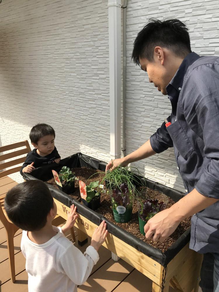 土を入れて苗を植え付け