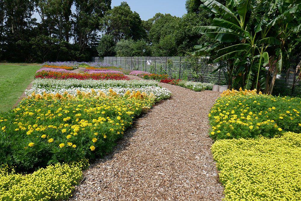 夢の島公園 夏花花壇