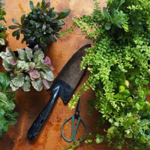 リーフが主役!夏に爽やかなグリーンの寄せ植えリースを作ろう