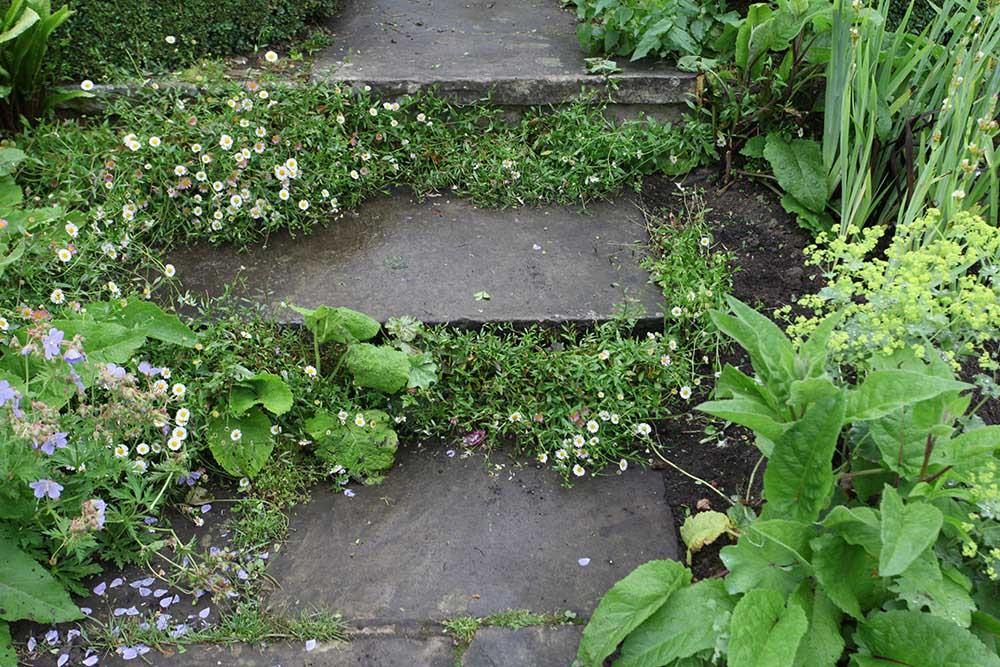 エリゲロンの階段