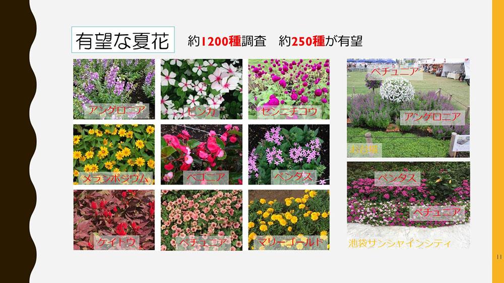 夏花として選定された花の一部