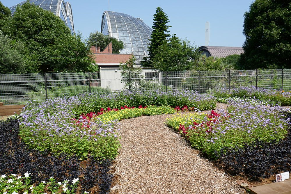 夢の島公園花壇