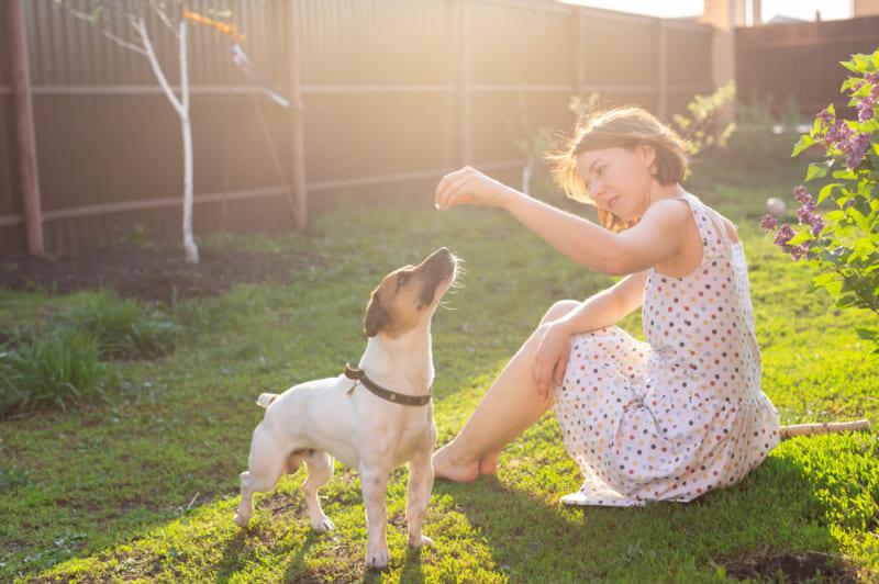 ペットと共に暮らす2〜戸建住宅でできる犬のためのガーデニングアイデア