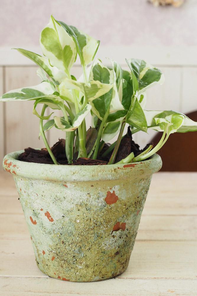 観葉植物を上手く育てるコツは?