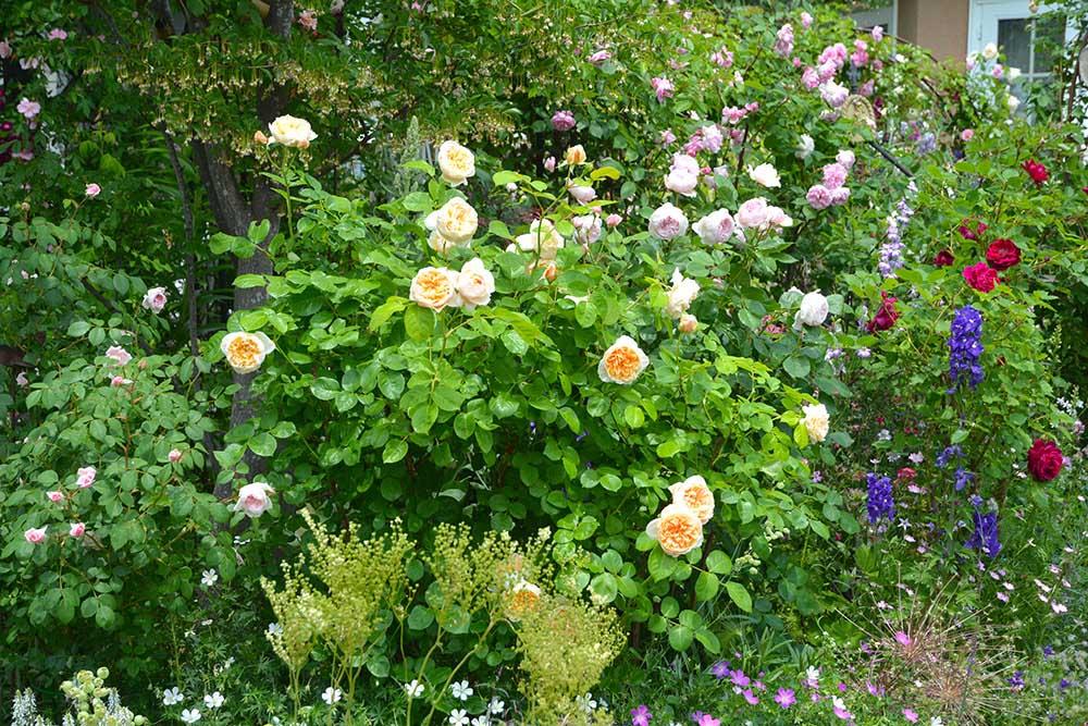 バラと花々