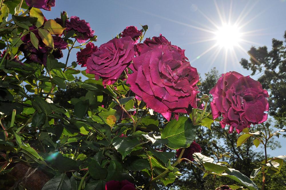 とちぎ花センター
