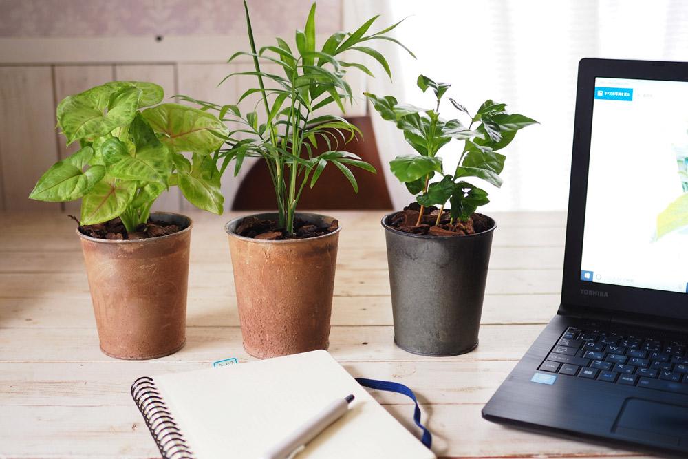 観葉植物の選び方と上手な育て方のコツ〜オフィスでガーデンセラピー〜