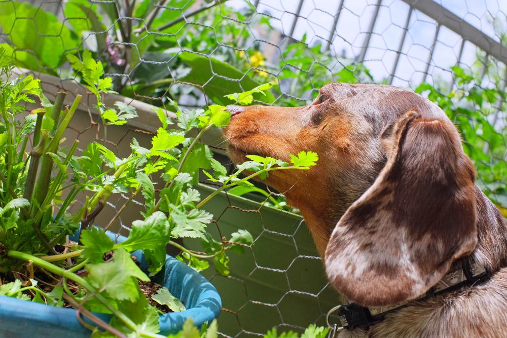ペットと共に暮らす1〜犬と暮らすマンションのバルコニーリフォームアイデア