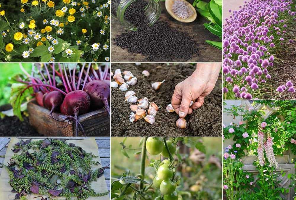 10月の庭仕事