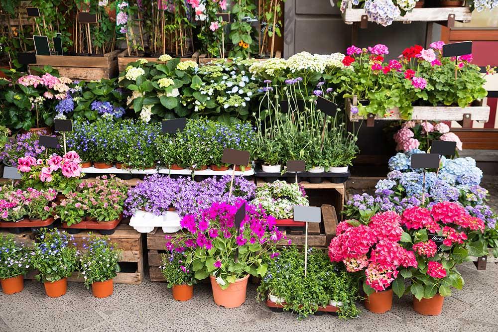 植物の選び方