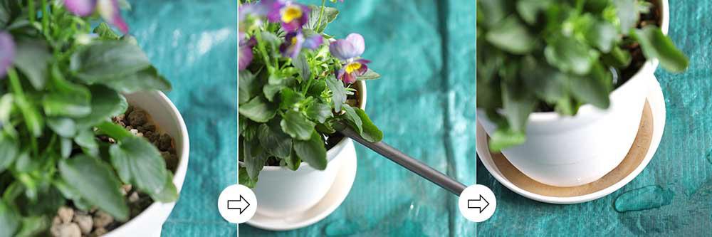 鉢植えのやり方
