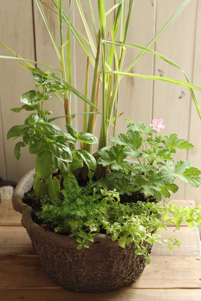 寄せ植えをしない方が上手く育つ?