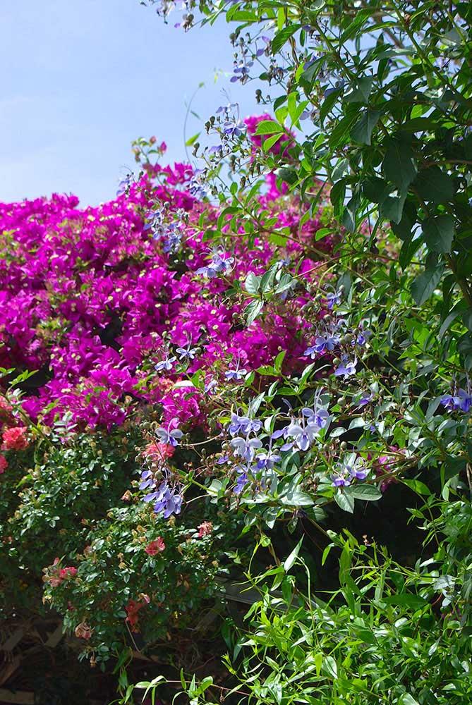 オーストリアの庭