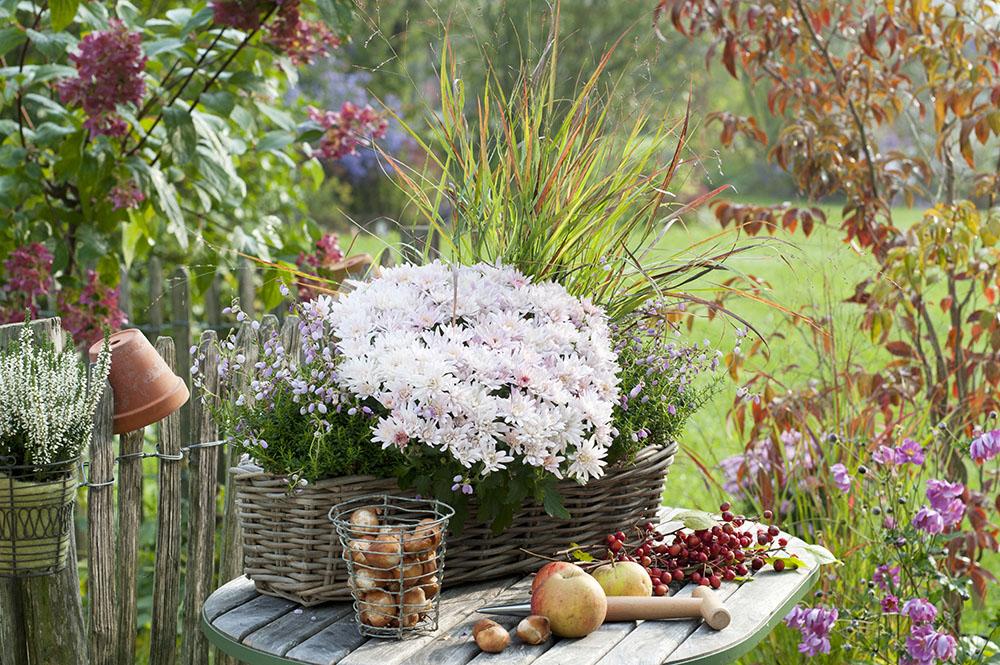 秋の収穫と花