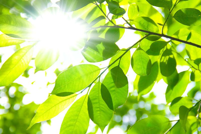 植物に必要な光とは