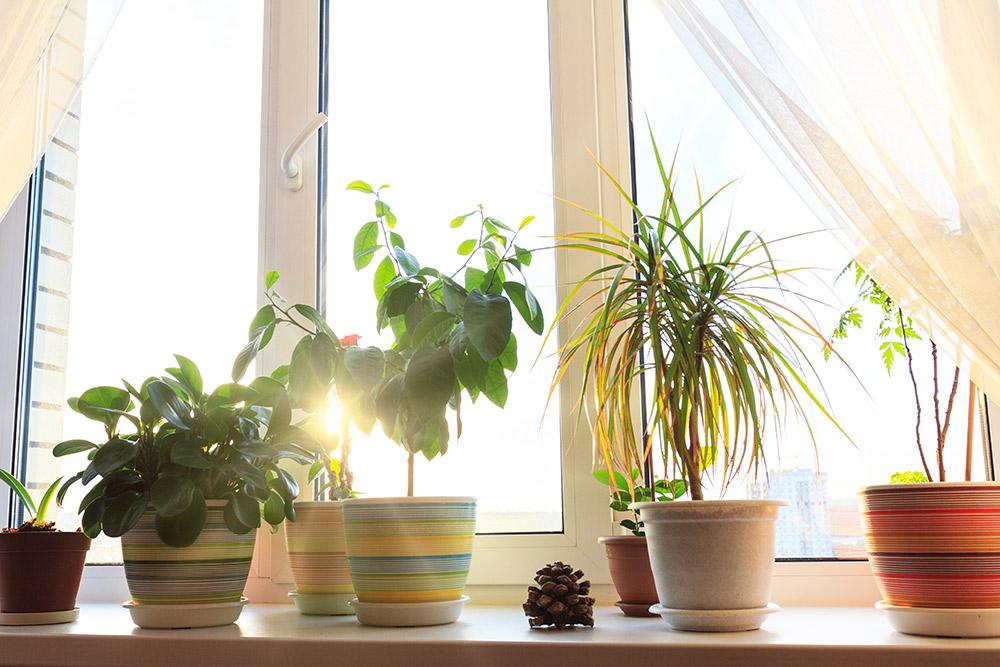 植物に必要な光