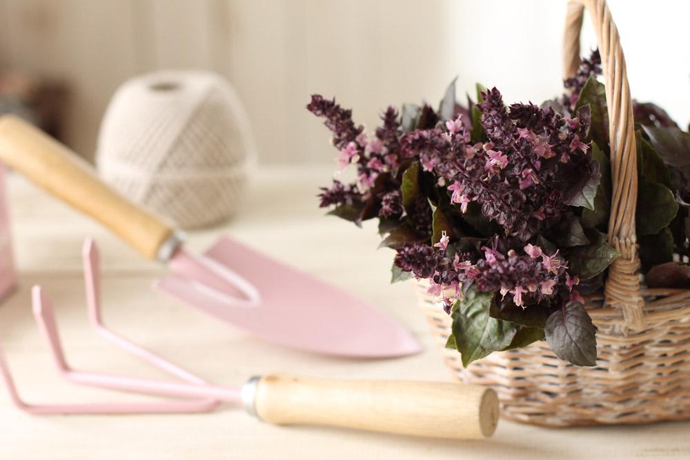 花は早めに摘みとって、飾って楽しみましょう