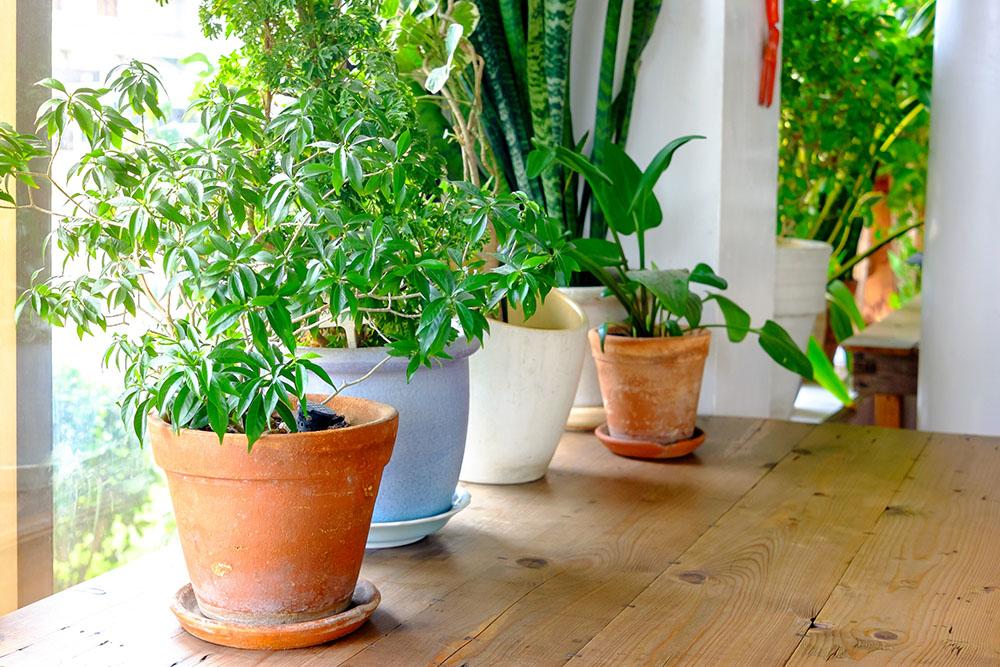 観葉植物の置き場