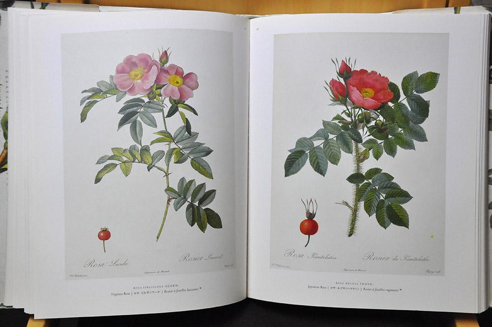バラ図譜の復刻版