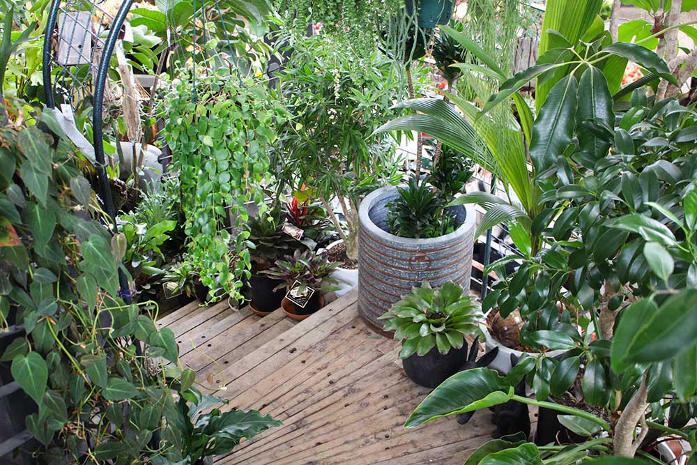 ガーデンガーデンの観葉植物