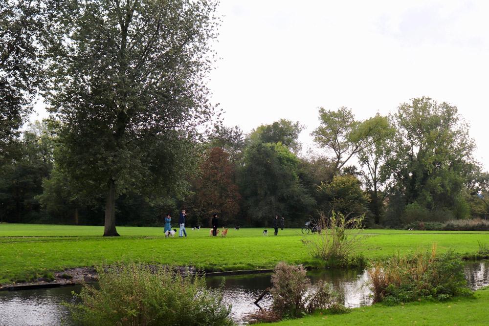 有機的なラインで芝・森・川などの自然風景を表現