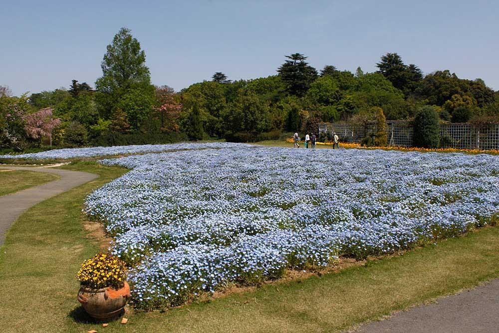 清水公園 花ファンタジア